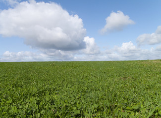 Meadow grass growing in field under blue sky