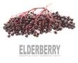 The Elder or Elderberry (Sambucus nigra).
