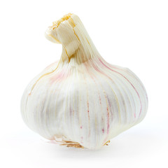 The Garlic (Allium sativum) on a white background.