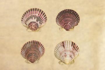 Four scallop shells.
