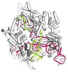 CRISPR-CAS9 gene editing complex from Streptococcus pyogenes.