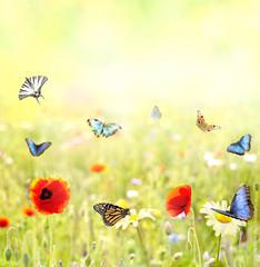 prato fiorito con farfalle