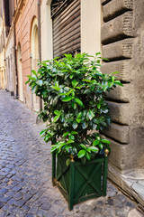 Old streets of Rome, Italy