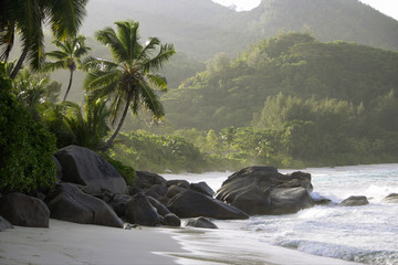 Rocks and palm trees along shore, Anse Intendance, Mahe', Seychelles
