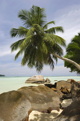 Rocks and palm trees along beach, Anse A La Mouche, Mahe', Seychelles