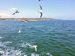 Керченский пролив, чайки и море