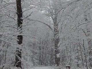 雪が降る森の風景_6