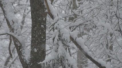 雪が降る森の風景_2