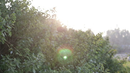 green bushes at dawn backlit