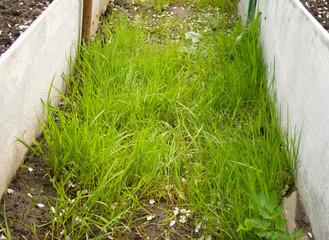 Green Grass on Ground