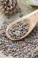 Aleppo pine seeds
