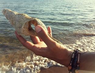 Trovare una conchiglia sulla spiaggia