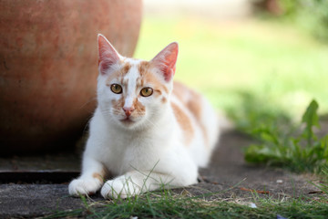 Young white and red cat laying down in the garden next to a pot