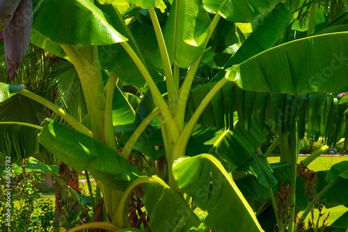 canvas print picture Tropic flora