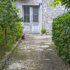 Cat sitting in front of the old door on an emty alley