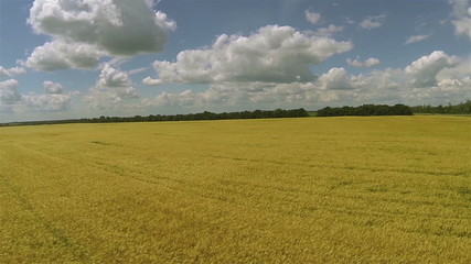 Bright yellow wheat field and  sky with clouds and road. Aerial