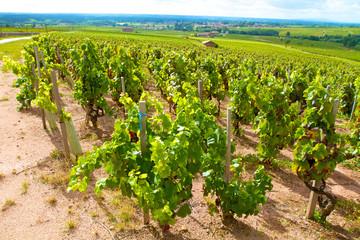 vignoble chénas beaujolais