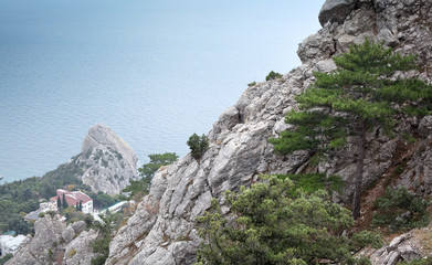 pine growing on a rock on the sea background