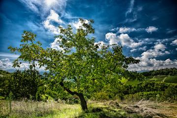 Albero in controluce sotto cielo nuvoloso