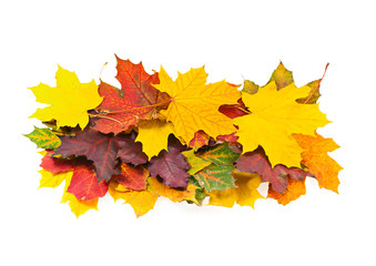 Bright autumn maple leaves on a white background.