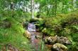 canvas print picture - Wald Bach Bäume Wasser