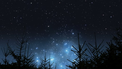 Pleiades rising over the forest