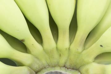 Young green banana close up.