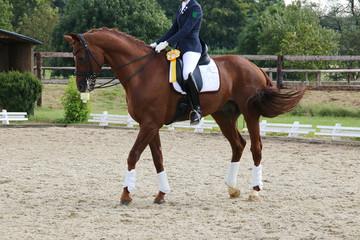 Pferdesport Kür Dressur Turnier
