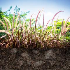 Grass on ground