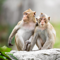 Couple monkey
