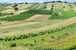 canvas print picture - Felder und Weingärten im Sommer