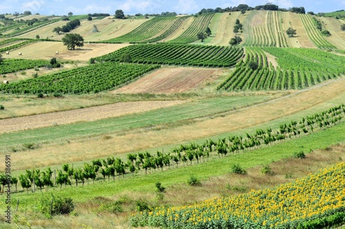 canvas print picture Felder und Weingärten im Sommer
