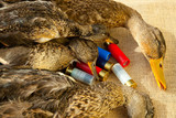 Hunting ammunition and ducks poster