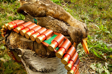 Hunting ammunition and duck