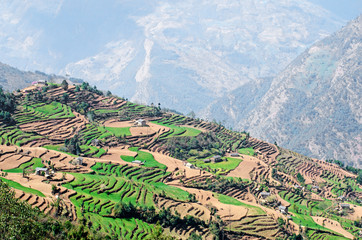 View of green and colorful rice field terraces, Nepal