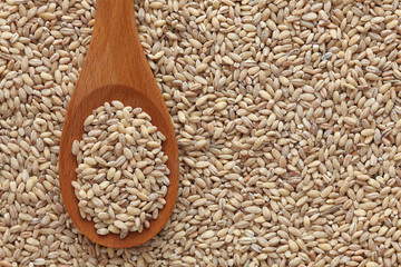 Pearl barley in a wooden spoon
