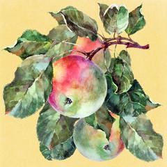 Three apple on a branch, beige background