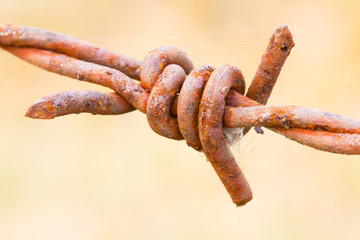old rusty barbed wire closeup
