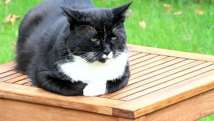 Kater sitzt wachsam auf Gartentisch
