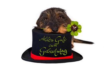 Dackel mit Zylinder, Kleeblatt, Alles Gute zum Geburtstag