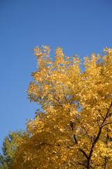 foliage of  aspen in colorado mountains