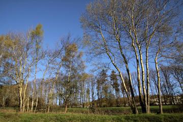 Frühlingsbäume im Taunus