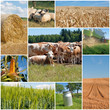 canvas print picture - Landwirtschaft