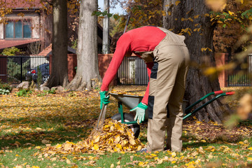 Man collecting leaves