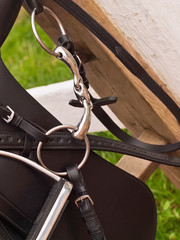 Bridle and horse dressage saddle. close up