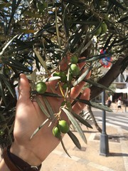 hand with olive branch