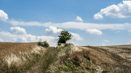 lonely tree on a field