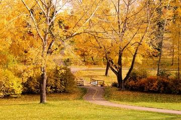 Path through a park with vibrant autumn colors