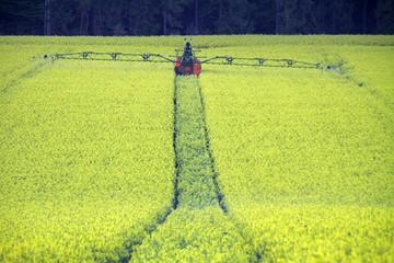 Traktor in einem Rapsfeld