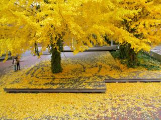 秋 キャンパスのシンボルツリー